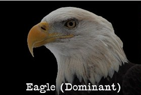 eagle bird personality